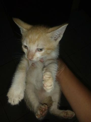 Doace 5 gatos - Foto 2