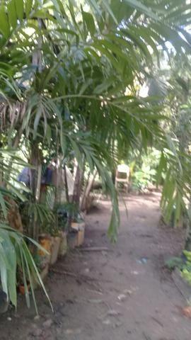 Palmeira triangular 3 metros - Foto 2