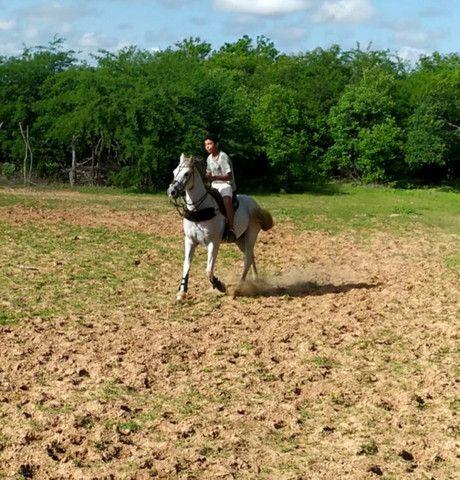 Cavalo de Vaquejada de direita  - Foto 2