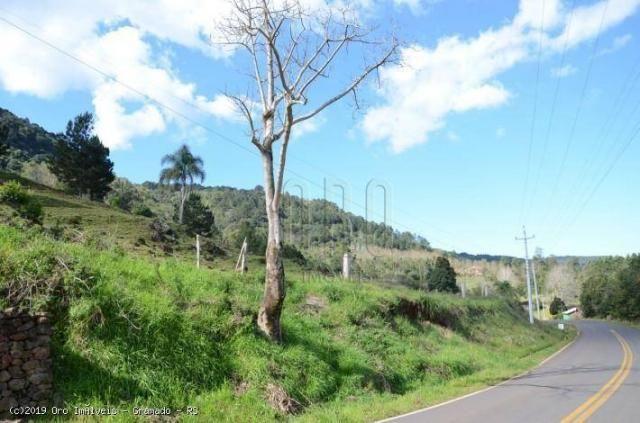 Sítio à venda, 45000 m² por r$ 897.000,00 - linha bonita - gramado/rs - Foto 6