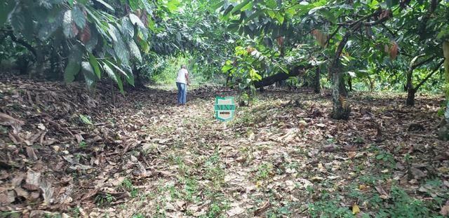 Camacan. Fazenda de Cacau com 430 Hectares. Rica em água - Foto 7