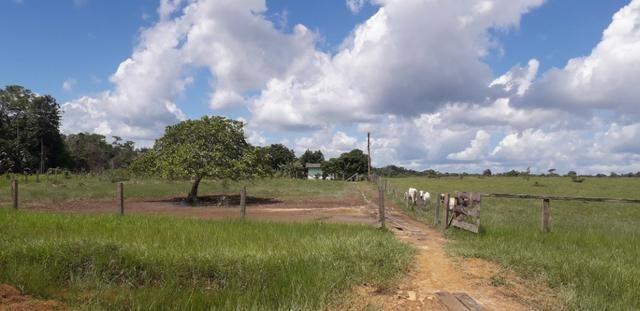 Fazenda bem estruturada - Foto 7