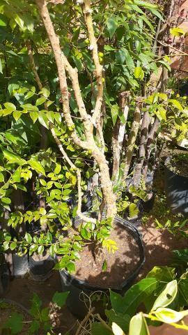 Plantas  produzindo - Foto 2
