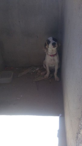 Vendo cachora de rasa filhote - Foto 4