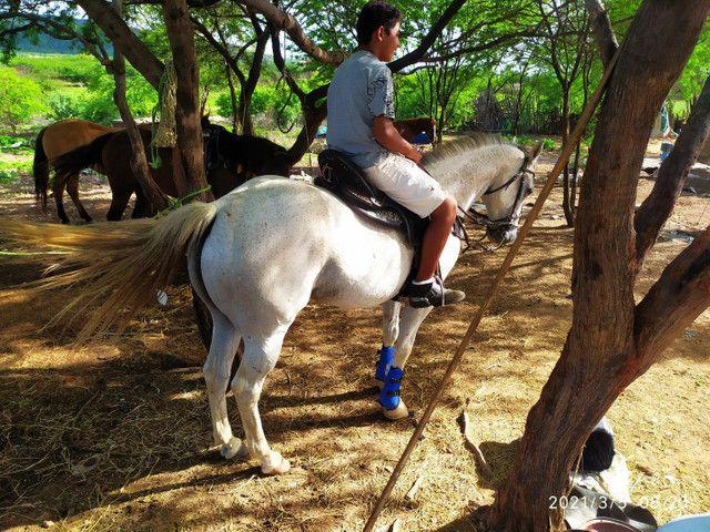 Cavalo de Vaquejada de direita  - Foto 3