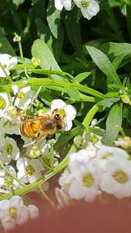 Caixa de criação de abelha. Apicultura. - Foto 5
