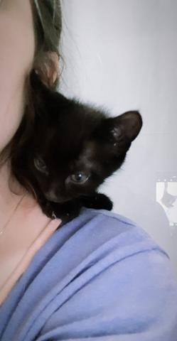 Gatinho muito carinhoso para adoção - Foto 2