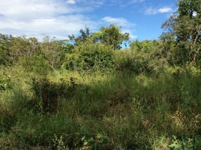 Fazenda 50 alqueirões - Serranopolis GO - Foto 4