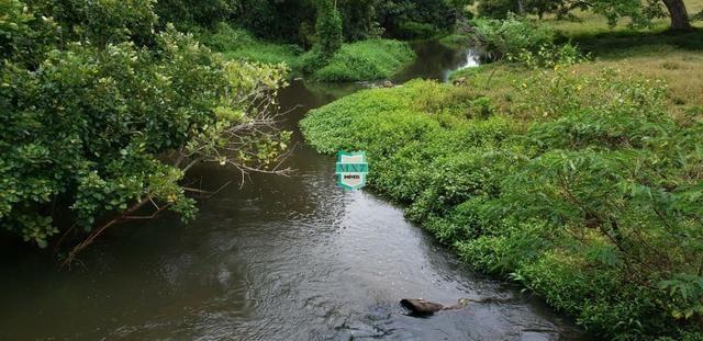 Camacan. Fazenda de Cacau com 430 Hectares. Rica em água - Foto 2