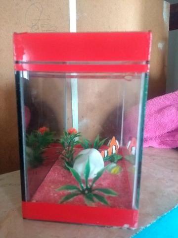 Vendo aquário beta - Foto 3