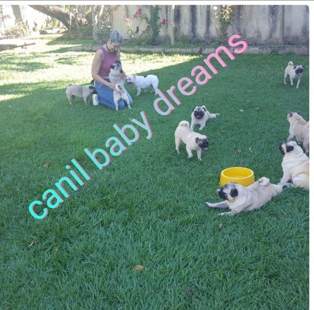 Canil baby dreams  / Pug  fêmea  - Foto 2