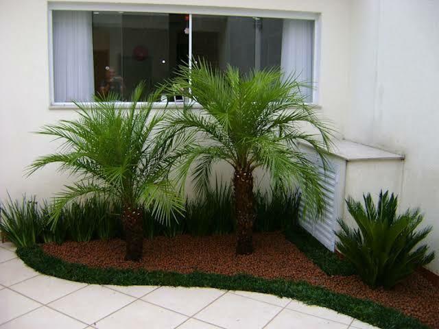 Palmeira fênix para jardim piscina paisagismo área de lazer sítio chácara - Foto 3