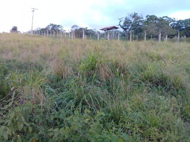 Excelente sítio, com casa sede e casa de caseiro na região de Santo Estevão Bahia - Foto 15