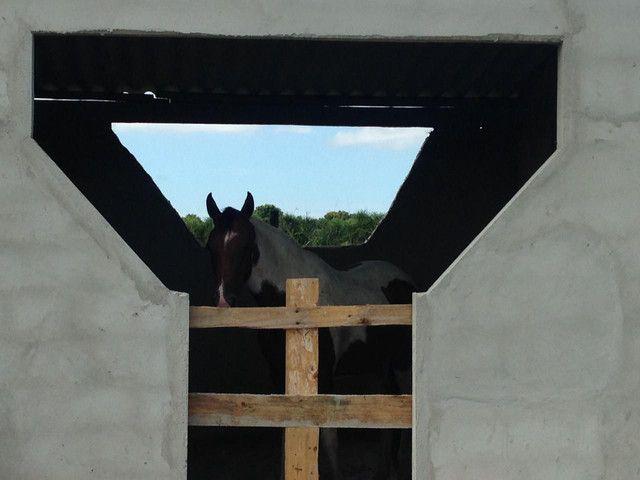 Hotel para cavalos - Foto 2