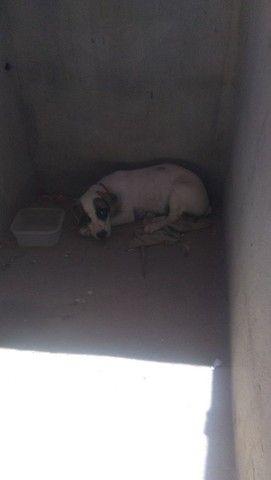 Vendo cachora de rasa filhote - Foto 3
