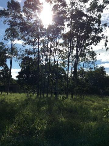 Fazenda 50 alqueirões - Serranopolis GO - Foto 3