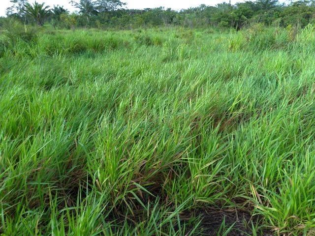 Vendo fazenda com 315 Hectares de terra!! - Foto 2