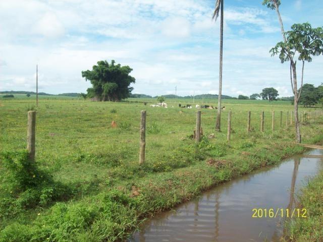 Chácara em Anicuns, 2 Alqueires e 37 Litros de Pura Beleza e Encantamento, Rica em Água - Foto 9
