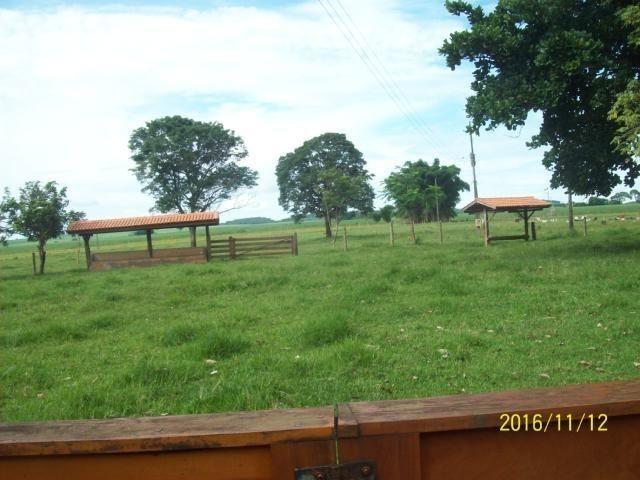 Chácara em Anicuns, 2 Alqueires e 37 Litros de Pura Beleza e Encantamento, Rica em Água - Foto 11