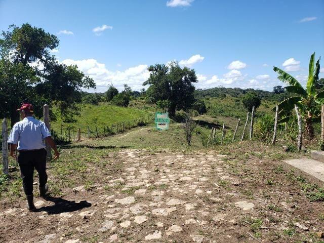 Ilhéus. Fazenda com 368 Hectares cultivo de cacau e gado - Foto 17
