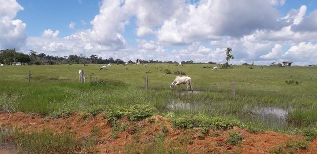 Fazenda bem estruturada - Foto 3