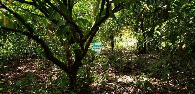 Camacan. Fazenda de Cacau com 430 Hectares. Rica em água - Foto 8