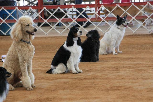 Adestramento Todas as Raças  - Foto 2