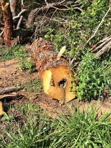 Fazenda 50 alqueirões - Serranopolis GO - Foto 7