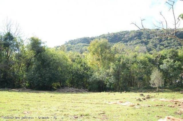 Sítio à venda, 45000 m² por r$ 897.000,00 - linha bonita - gramado/rs - Foto 11