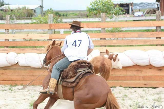 Cavalo Crioulo Inteiro Confirmado