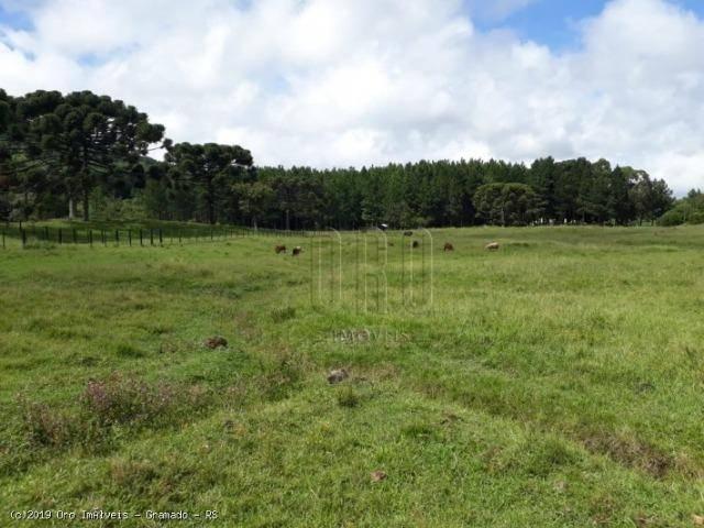 Sítio à venda, 4 m² por r$ 2.156.000 - serra grande - gramado/rs - Foto 8