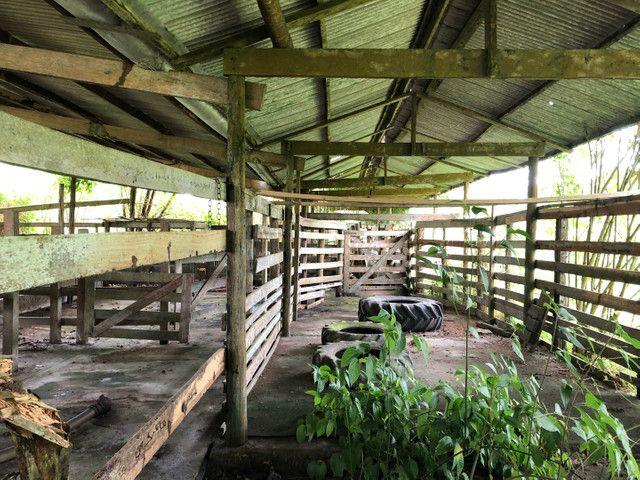 Vendo linda fazenda com 890 hectares na AM-010  liga os municípios de Manaus, Rio Preto  - Foto 7