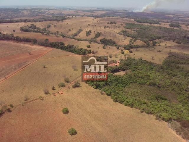 Fazenda à 35 km Goiânia (Beira Rio e Plana) - Foto 7