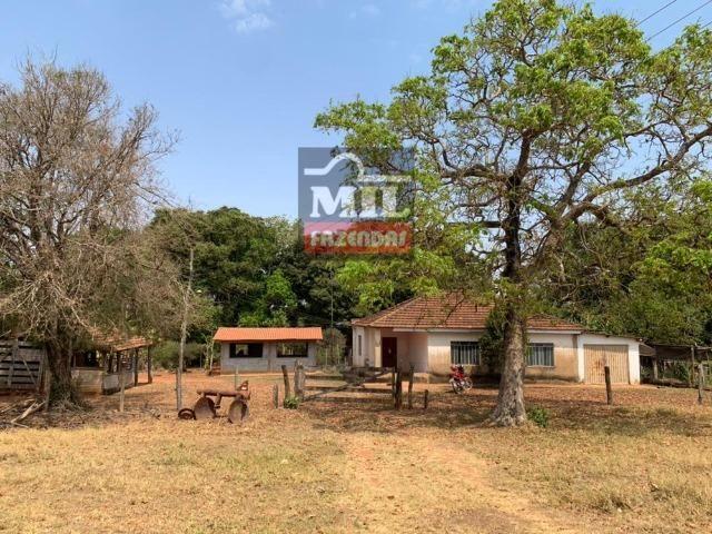 Fazenda à 35 km Goiânia (Beira Rio e Plana) - Foto 2
