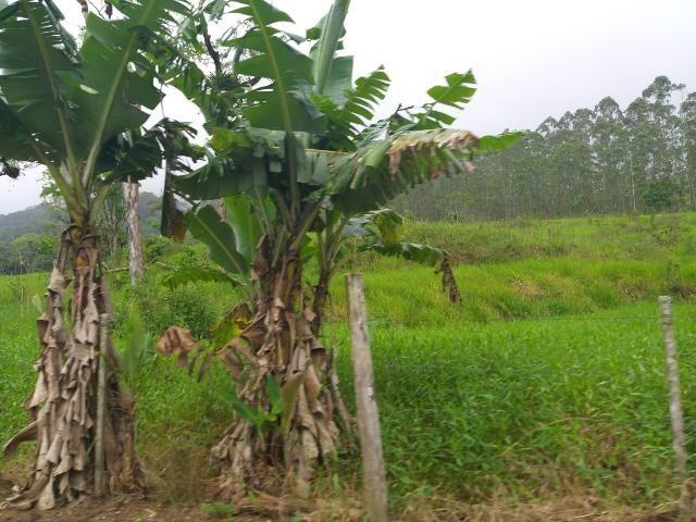 Sitio de 10 hectares no bairro baú em ilhota com plantação de eucalipto - Foto 12