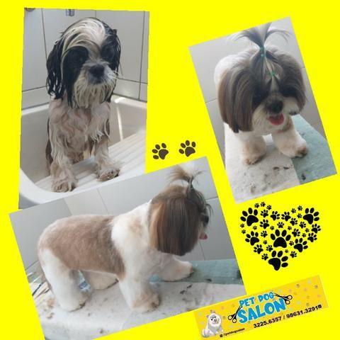 Pet dog salon - Foto 2