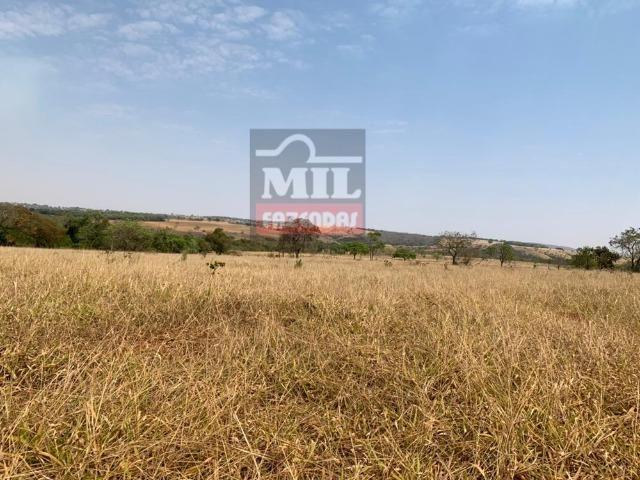 Fazenda à 35 km Goiânia (Beira Rio e Plana) - Foto 3