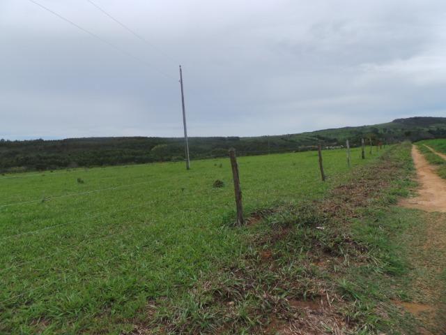 Fazenda 132 Alqueires Municipio Cocalzinho Aceita proposta - Foto 13