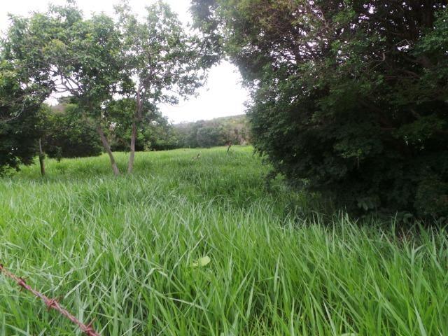 Fazenda 132 Alqueires Municipio Cocalzinho Aceita proposta - Foto 7