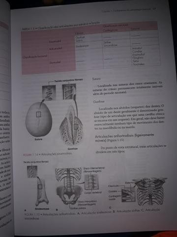 Cinesiologia Estrutural - Foto 5