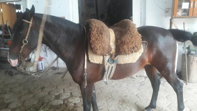 Cavalo Zaino - Foto 3