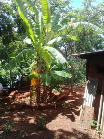 Vendo Chácara na Comunidade Rural de Extrema em Bocaiuva-Mg - Foto 13