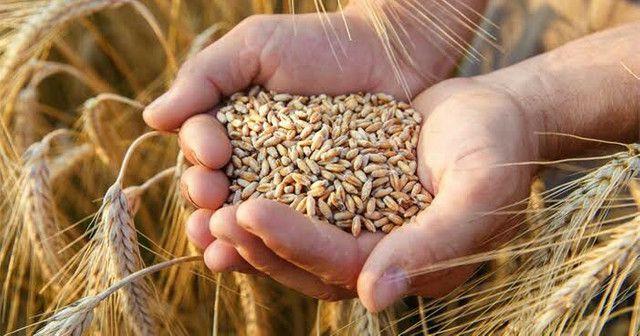 Capital de giro de trigo