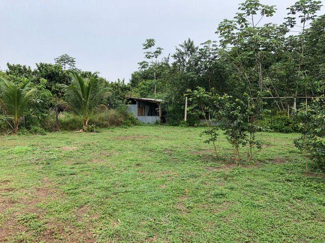 Vendo linda fazenda com 890 hectares na AM-010  liga os municípios de Manaus, Rio Preto  - Foto 2