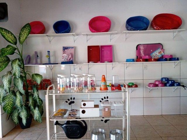 Pet shop - Foto 3