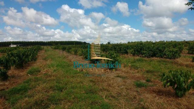 Fazenda à venda, 890000 m² por r$ 1.300.000 - teixeira do progresso - mascote/ba - Foto 19