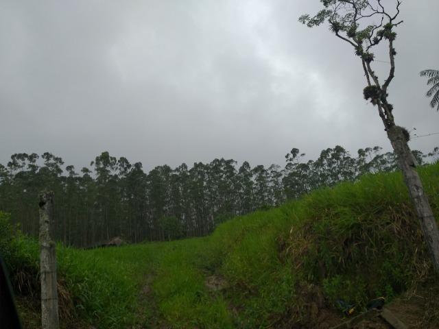 Sitio de 10 hectares no bairro baú em ilhota com plantação de eucalipto