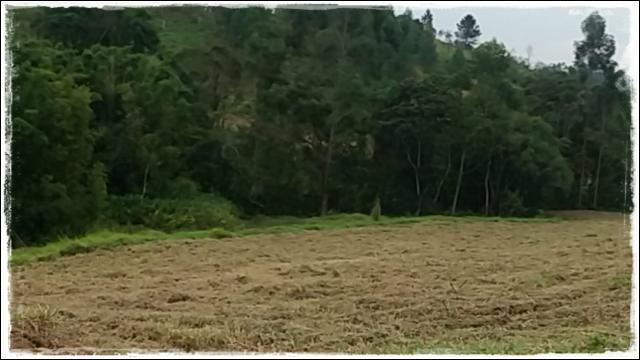Venha rapido terreno de 1000m² próximo de Cotia - Foto 2