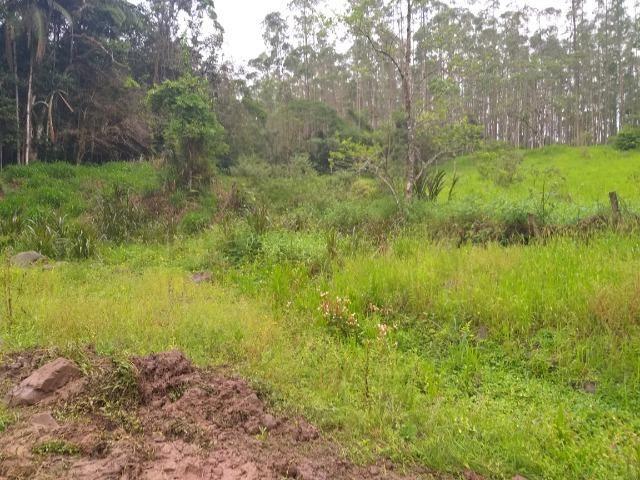 Sitio de 10 hectares no bairro baú em ilhota com plantação de eucalipto - Foto 10
