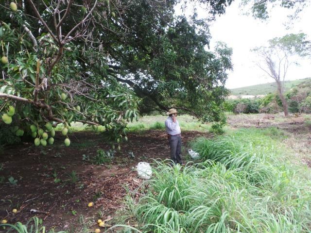 Fazenda 132 Alqueires Municipio Cocalzinho Aceita proposta - Foto 10